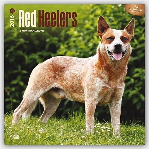 Red Heelers 2016 - Australischer Schäferhund - 18-Monatskalender mit freier DogDays-App: ...