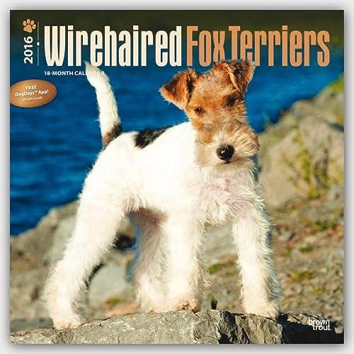 9781465046635: Fox Terriers 2016 - Foxterrier - 18-Monatskalender mit freier DogDays-App: Original BrownTrout-Kalender