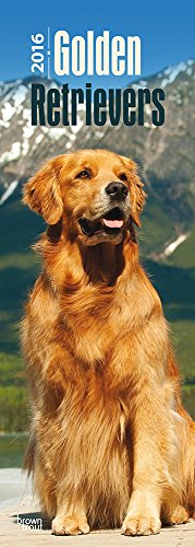 9781465048363: Golden Retrievers 2016 Slim