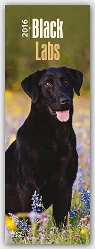 9781465048387: Black Labrador Retriever 2016 Slimline Calendar