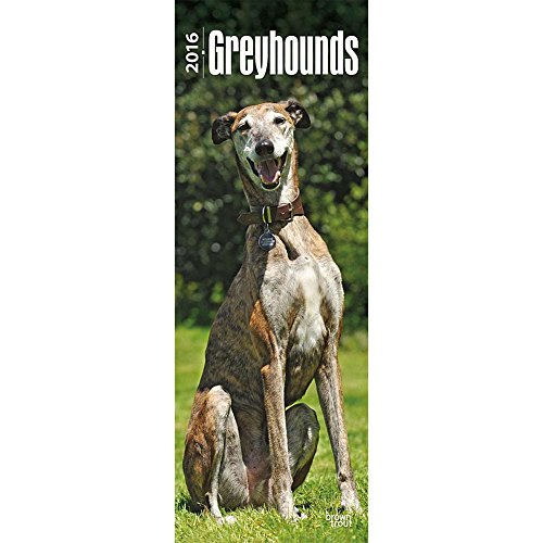 9781465048509: Greyhounds Vertical Wall Calendar by BrownTrout