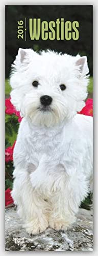 9781465048554: West Highland White Terriers 2016 Slimline Calendar