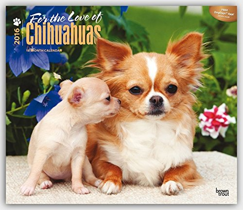 9781465050601: Chihuahuas - For the Love of 2016 - 18-Monatskalender mit freier DogDays-App: Original BrownTrout-Kalender - Deluxe