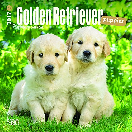 9781465053725: Golden Retriever Puppies 2017 Calendar