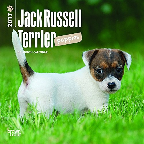 9781465053732: Jack Russell Terrier Puppies 2017 Mini 7x7 (Multilingual Edition)