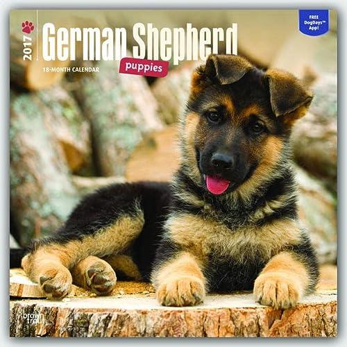 9781465055774: German Shepherd Puppies 2017 Square (Multilingual Edition)