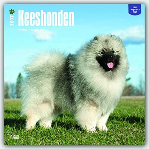 9781465055880: Keeshonden Keeshond - 2017 - 12 Inch x 12 Inch Hanging Square Wall Photographic Dog Breed Planner Calendar