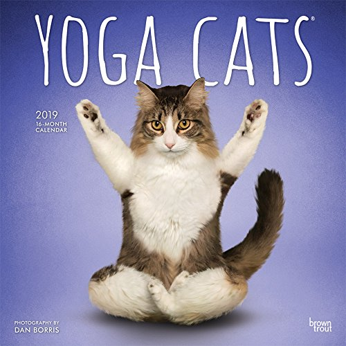Yoga Cats 2019 12 x 12 Inch: BrownTrout Publishers, Inc.