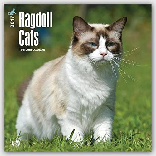 9781465081520: Ragdoll Cats 2017 Square