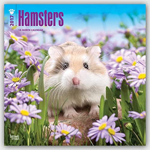 9781465081599: Hamsters 2017 Wall Calendar (Square Wall)