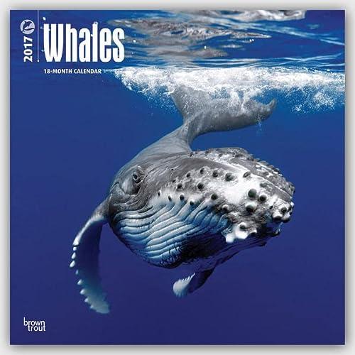 9781465083203: Whales 2017 Calendar