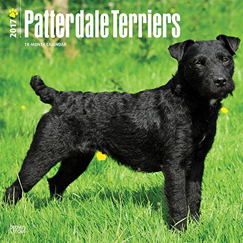 9781465083906: Patterdale Terriers 2017 Calendar
