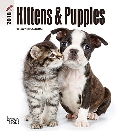 Kittens & Puppies 2018 7 x 7 Inch Monthly Mini Wall Calendar, Animals Cute Kittens