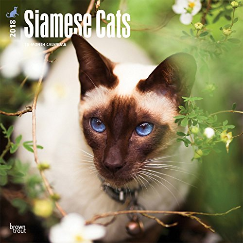 Siamese Cats 2018 12 x 12 Inch Monthly Square Wall Calendar, Animals Cats: BrownTrout Publishers