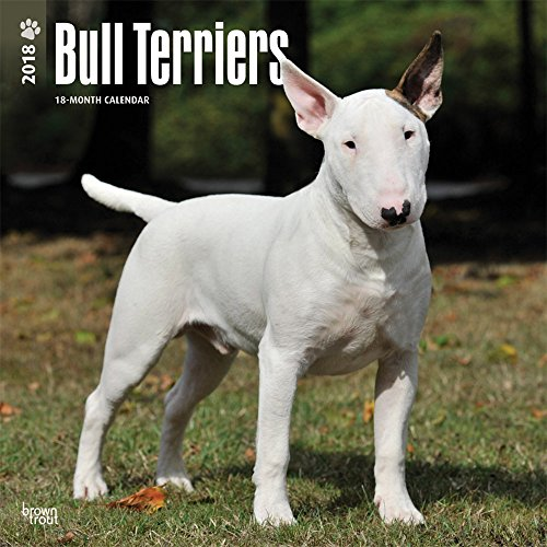 Bull Terriers 2018 12 x 12 Inch Monthly Square Wall Calendar, Animals Dog Breeds Terriers (...
