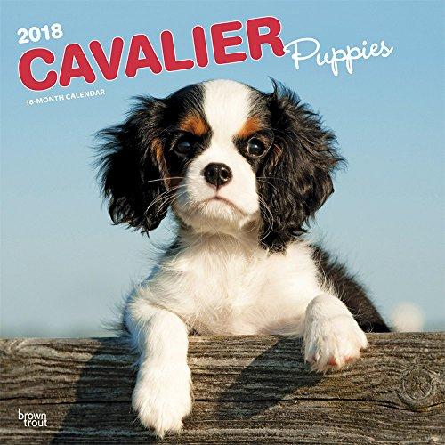 Cavalier King Charles Spaniel Puppies 2018 Calendar
