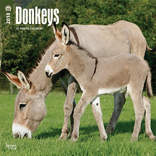 Donkeys 2018 12 x 12 Inch Monthly Square Wall Calendar, Domestic Animals: BrownTrout Publishers
