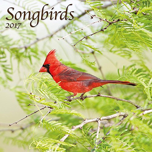 9781469336688: Songbirds 2017 Calendar