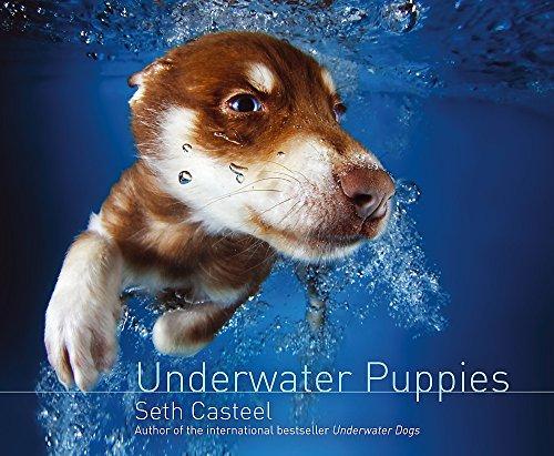 9781472209405: Underwater Puppies