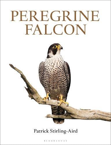 9781472918666: Peregrine Falcon