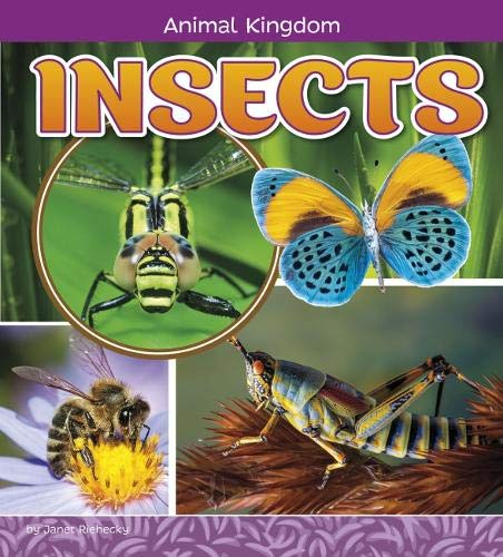 9781474734585: Insects (A+ Books: Animal Kingdom)