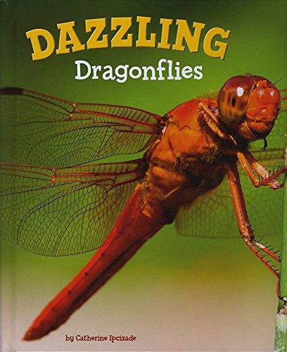 9781474736039: Dazzling Dragonflies (A+ Books: Marvellous Minibeasts!)