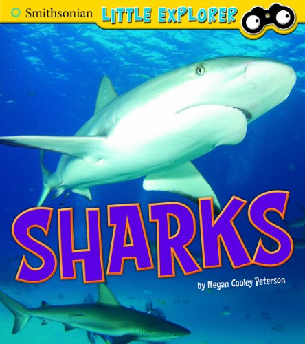 9781476535401: Sharks (Little Scientist)