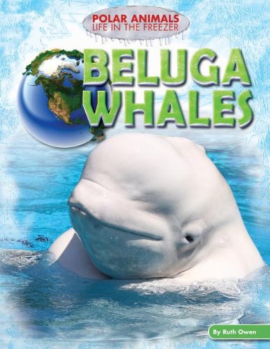 9781477702291: Beluga Whales (Polar Animals: Life in the Freezer)