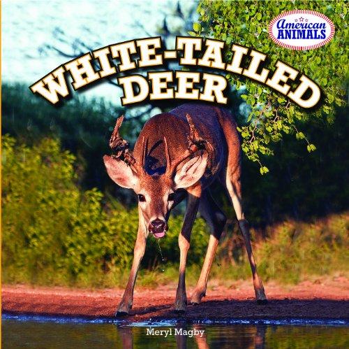 White-Tailed Deer (American Animals): Meryl Magby