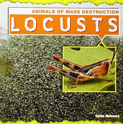9781482410525: Locusts (Animals of Mass Destruction)