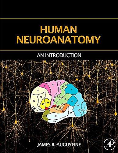 9781483299815: Human Neuroanatomy