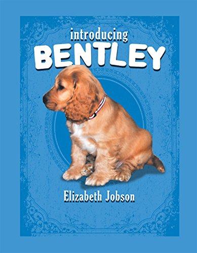 Introducing Bentley: Jobson, Elizabeth