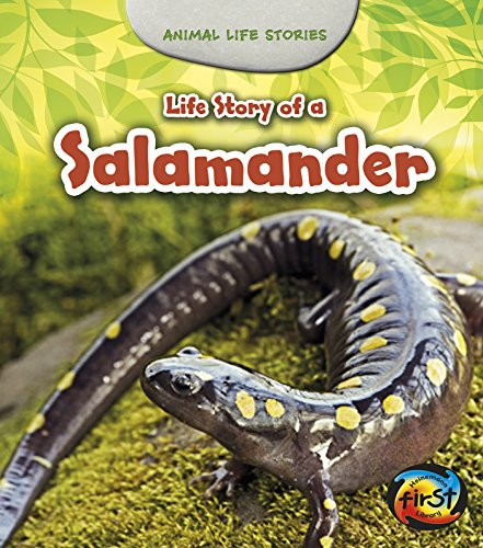 Life Story of a Salamander (Animal Life Stories): Guillain, Charlotte
