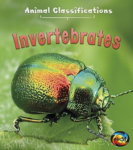 9781484607596: Invertebrates (Animal Classifications)