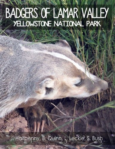 9781490434346: Badgers of Lamar Valley: Yellowstone National Park