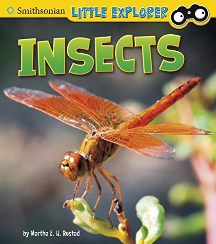 Insects (Little Scientist): Rustad, Martha E. H.