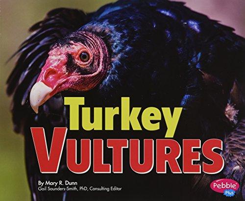 9781491423127: Turkey Vultures (Birds of Prey)