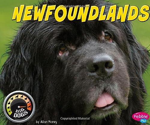 Newfoundlands (Big Dogs): Morey, Allan