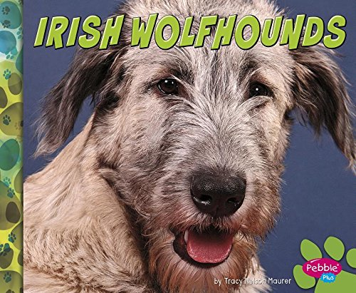 9781491479810: Irish Wolfhounds (Big Dogs)