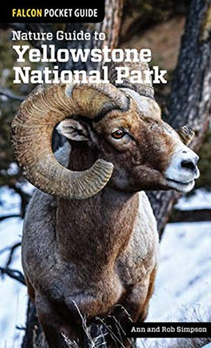 9781493009671: Falcon Pocket Guide Nature Guide to Yellowstone National Park