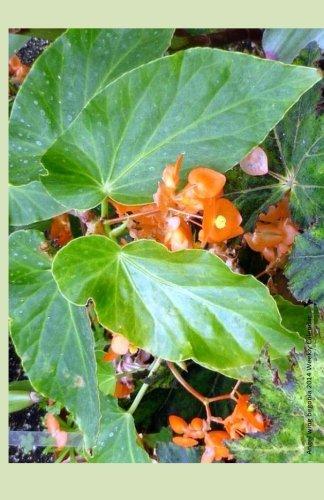 9781494290511: Angel Wing Begonia 2014 Weekly Calendar: Week by week calendar with photo of an angel wing begonia plant