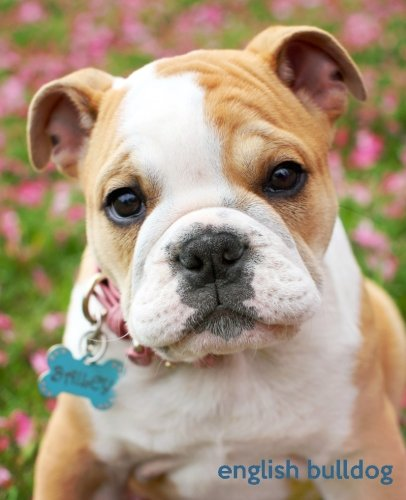 English Bulldog: A Gift Journal for People who Love Dogs: English Bulldog Puppy Edition (So Cute ...