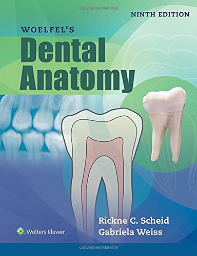 9781496320223: Woelfels Dental Anatomy