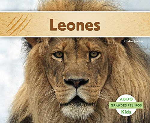Leones (Abdo Kids: Grandes Felinos) (Spanish Edition): Archer, Claire