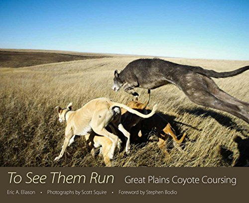 To See Them Run: Great Plains Coyote Coursing: Eric A. Eliason
