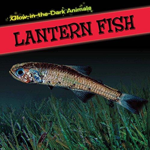 Lantern Fish (Glow-in-the-Dark Animals): Howell, Sara