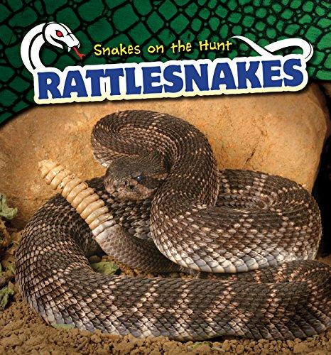 Rattlesnakes (Snakes on the Hunt): Shaye Reynolds
