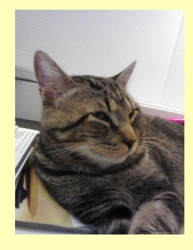 Cool Cat Blank Book Lined 8.5 x: D Roffler