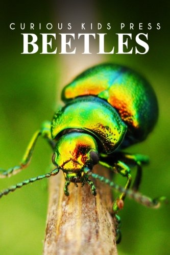 Beetles - Curious Kids Press: Kids book about animals and wildlife, Children's books 4-6: ...
