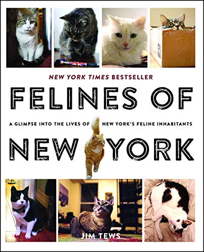 Felines of New York. A Glimpse Into the Lives of New York s Feline Inhabitants